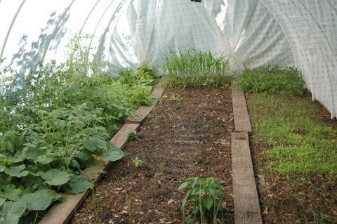 An inexpensive springtime greenhouse.