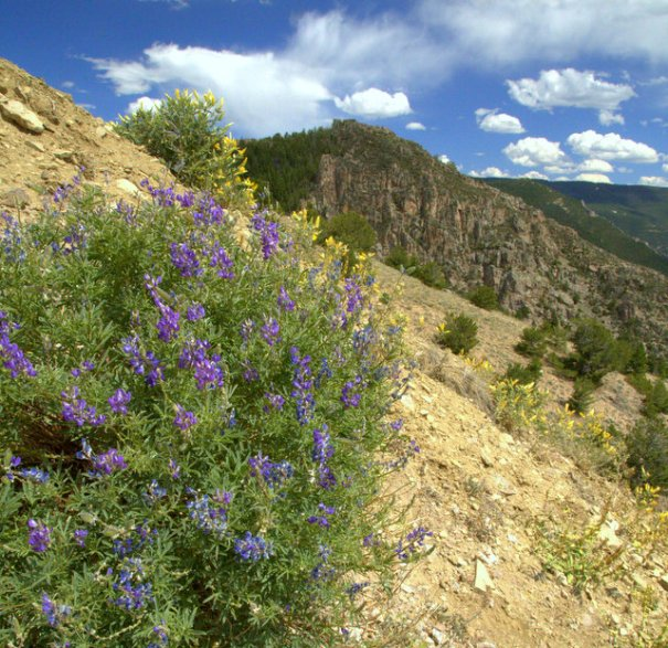 There were some really pretty flowers on the hillside below the pullover where I took the above picture, so here is a shot looking up the hill with some pretty wildflowers in the foreground. The side of this hill was very steep and the ground was very soft, I had a hard time getting these shots!