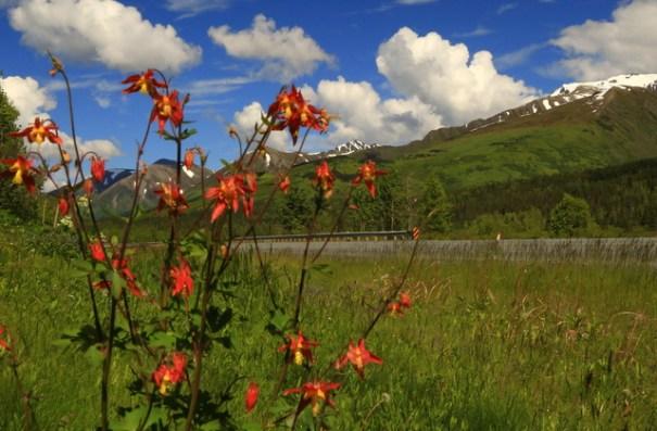 Flowers near Summit Lake.
