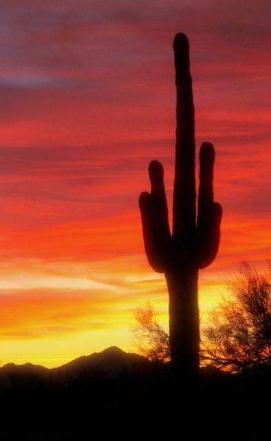 Qzt-Sunset-Cactus-Best