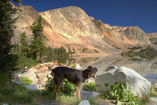 Cody enjoyed the Snowy River Range every bit as much as I did!!
