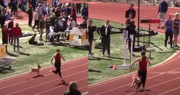 지난 17일(현지 시각) 미국 유타주 로건고등학교에서 열린 여자 800m 계주 경기 도중 개 한 마리가 트랙에 뛰어들어 선수들을 따라잡고 1등으로 결승선을 통과하는 모습이 포착됐다./플로 트랙 유튜브 캡쳐