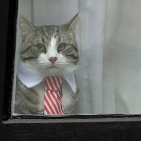 Qué pasó con el gato que acompañó a Julian Assange en la embajada de Ecuador