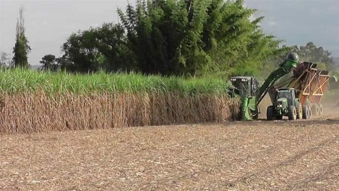 La producción de caña es la base de una economía regional muy importante en el NOA, que incluye la producción de azúcar, papel y biocombustibles.