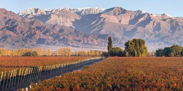 Vineyards in Valle de Uco, Mendoza.