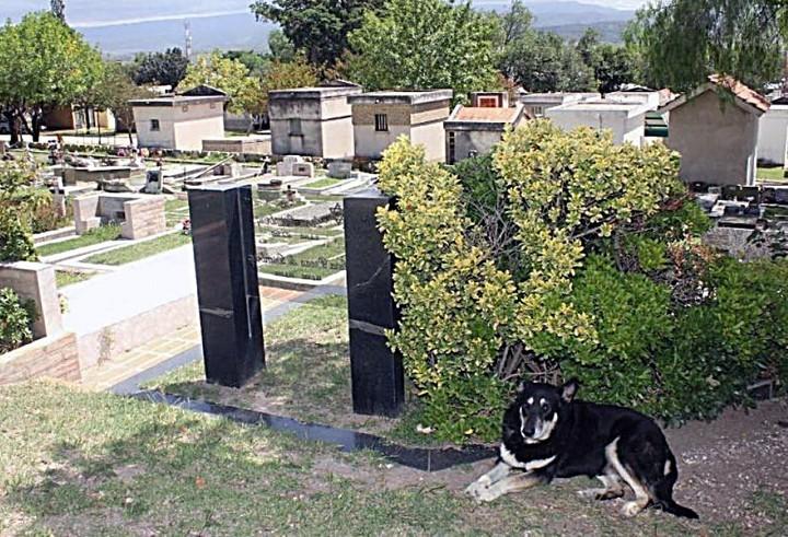 """Murió """"Capitán"""", el perro cordobés que visitó la tumba de su dueño durante casi 11 años"""