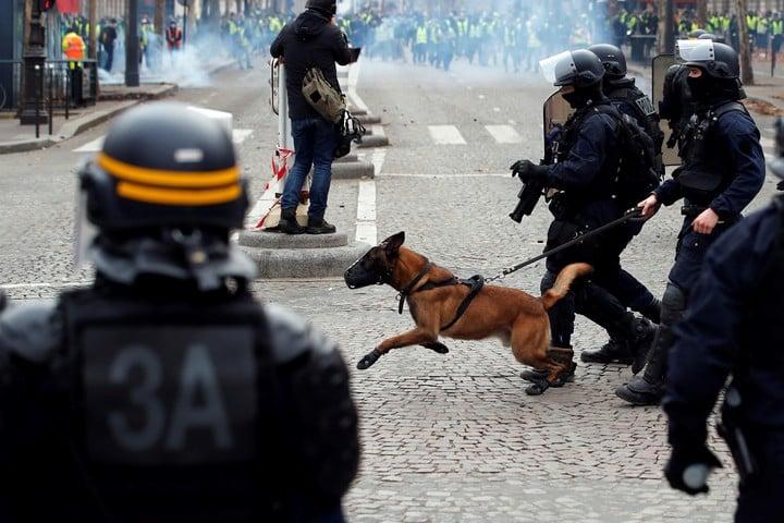 Policías y perros antidisturbios, en acción. (EFE)