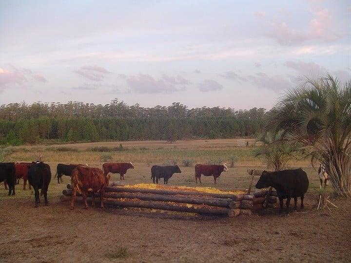 La región pampeana (provincias de La Pampa, Córdoba, Santa Fe, Entre Ríos y Buenos Aires) ocupa la segunda posición en cuanto a calidad de vida