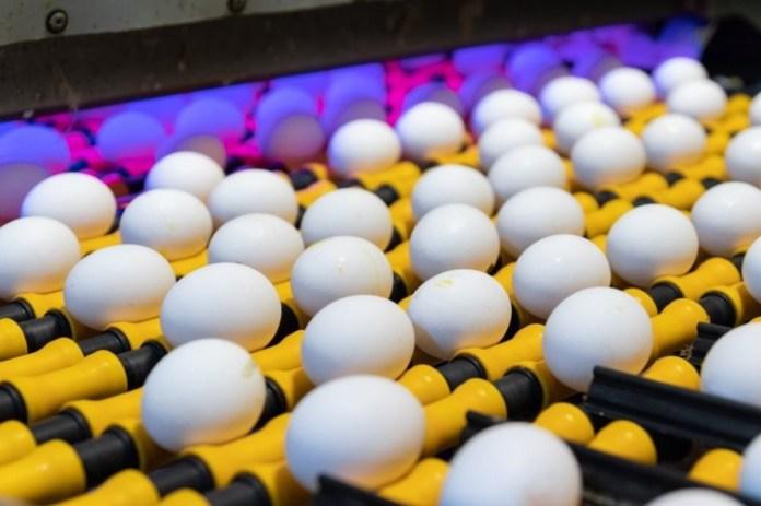 La Argentina está entre los 5 países más consumidores de huevo del mundo, se consumen 274 huevos por año por persona.