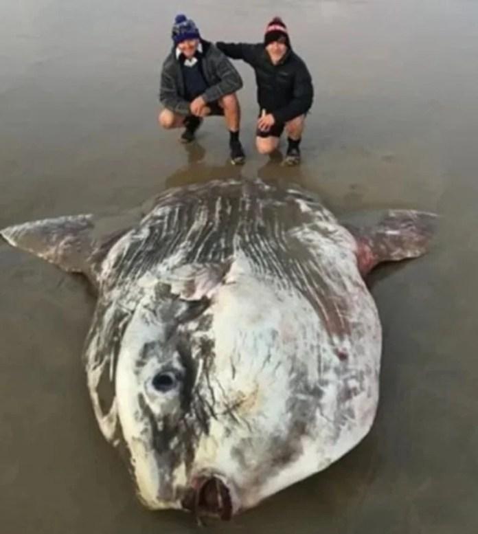 Los turistas que hallaron al pez luna en una playa de Victoria, Australia.
