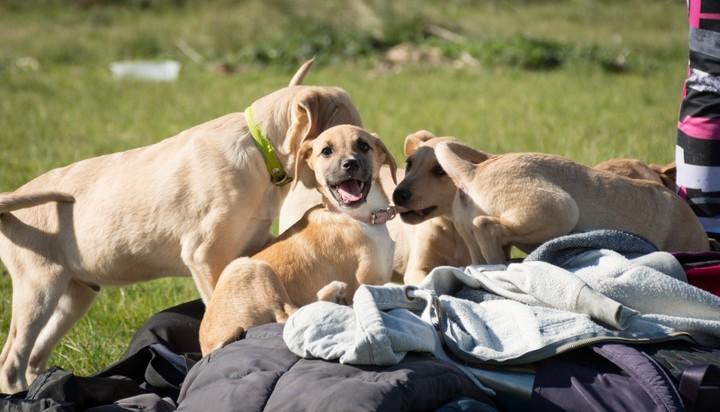 Con la cuarentena aumentó la cantidad de adopciones pero también la de mascotas abandonadas.