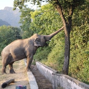 """The """"loneliest elephant in the world"""" came to his new home and is now free after 35 years of captivity"""