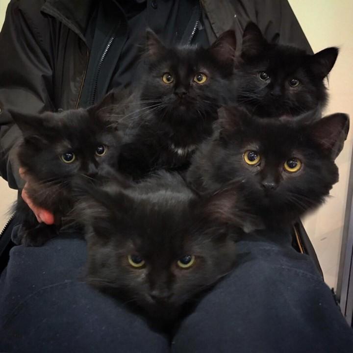 Lisianne y los gatitos. Foto: Facebook Chatons Orphelins Montreal
