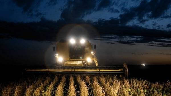 Por el crecimiento de los cereales, la producción sojera se replegaría un 5%, pero sigue siendo con margen el principal cultivo del país.