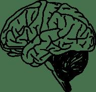 Gehirn-Clip-Art Download 122 clip arts (Seite 1