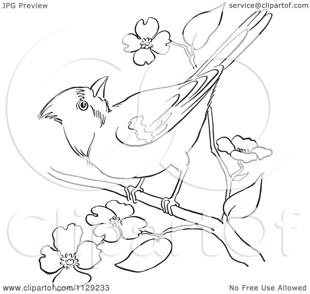 Cartoon Clipart Of An Outlined Cardinal Bird On A Blossom
