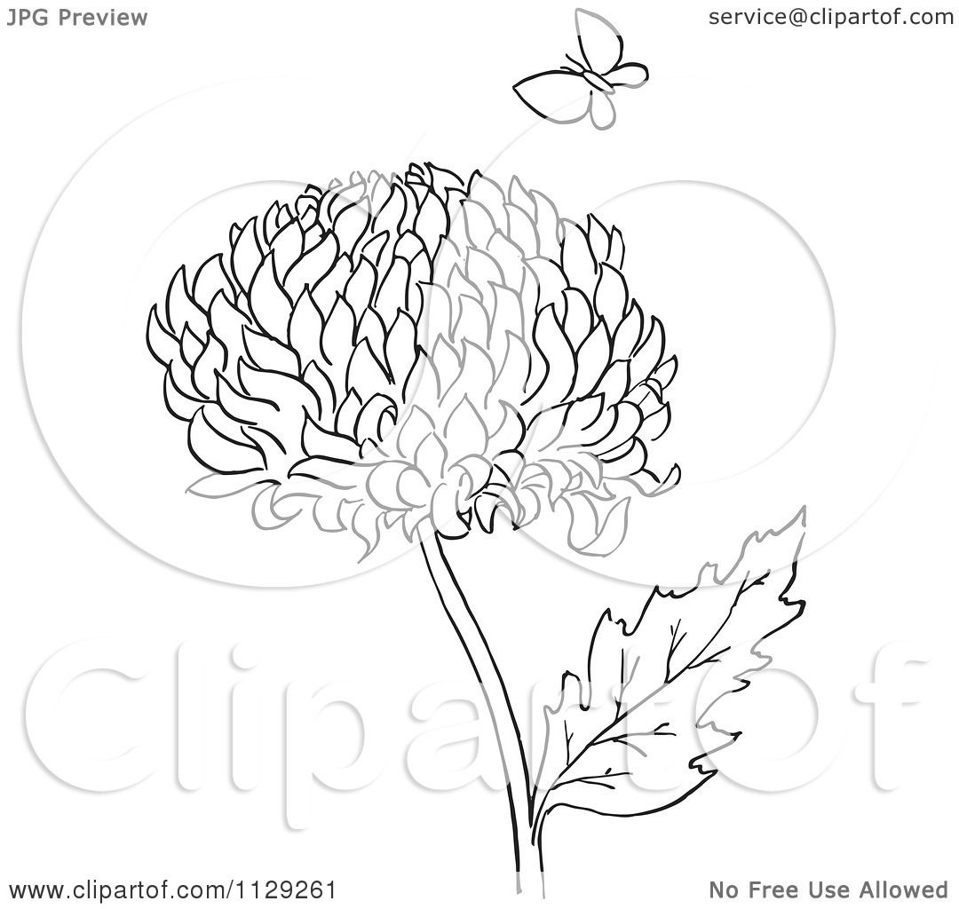 Cartoon Clipart Of An Outlined Chrysanthemum Flower And