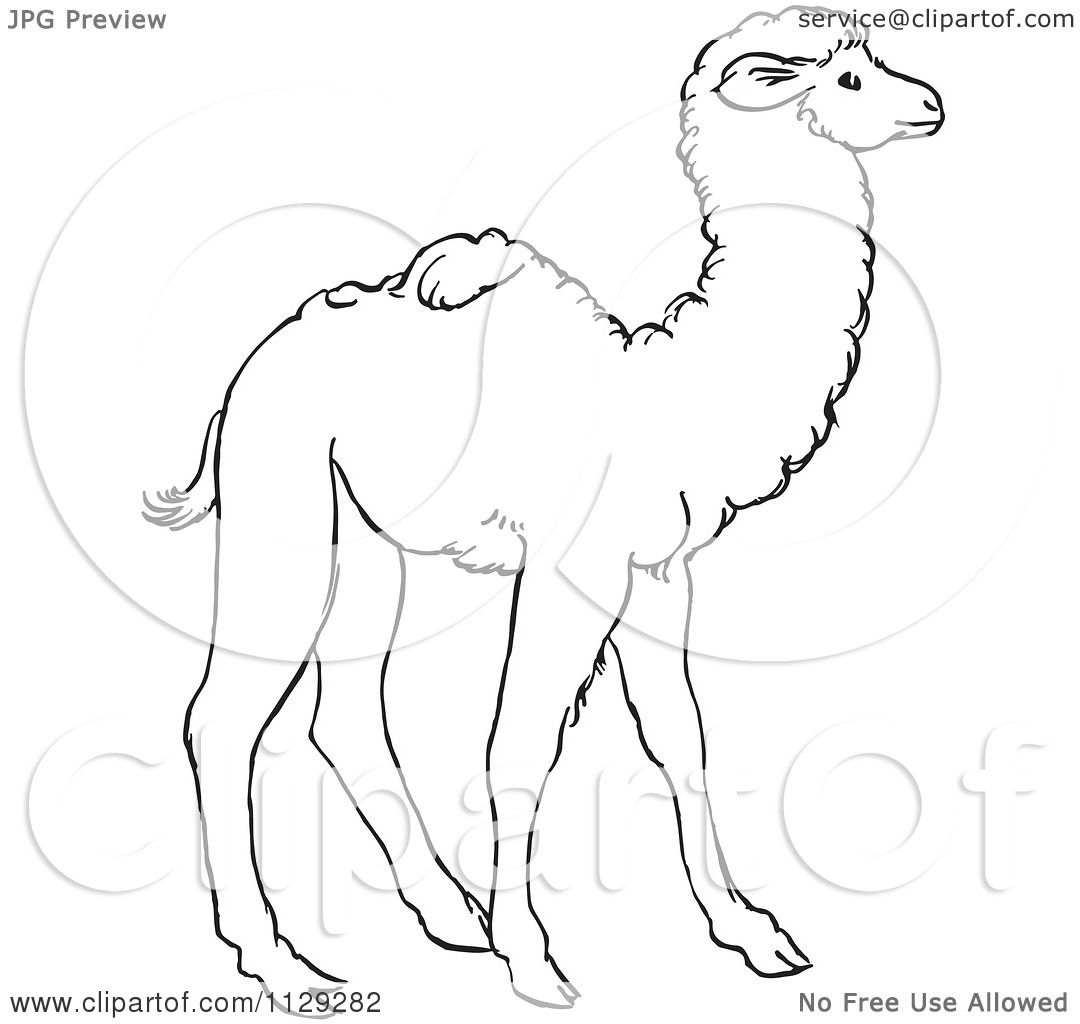 Cartoon Clipart Of An Outlined Cute Baby Camel