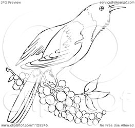 bird berries cartoon clipart oriole coloring outlined picsburg without vector royalty