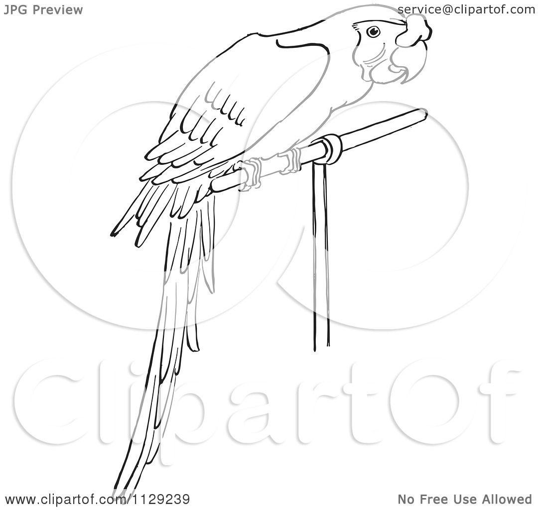Black And White Cartoon Macaw