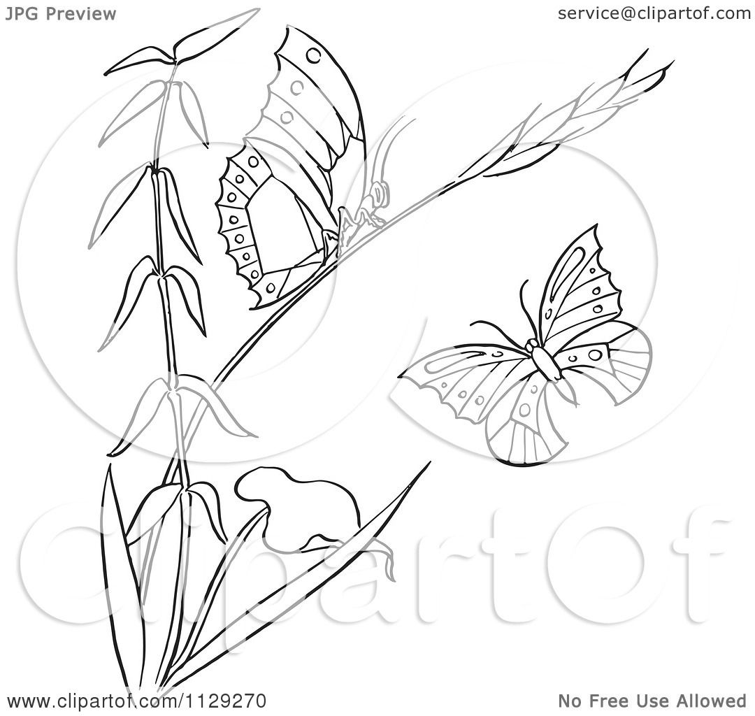Cartoon Clipart Of An Outlined Plant With Butterflies