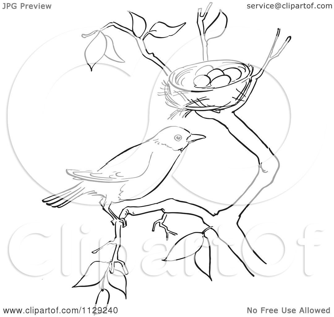 Cartoon Clipart Of An Outlined Robin On A Branch By Its