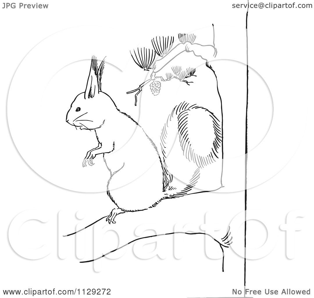 Cartoon Clipart Of An Outlined Squirrel On A Pine Tree