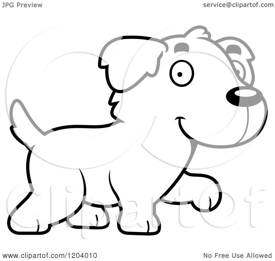 a chewbacca dog