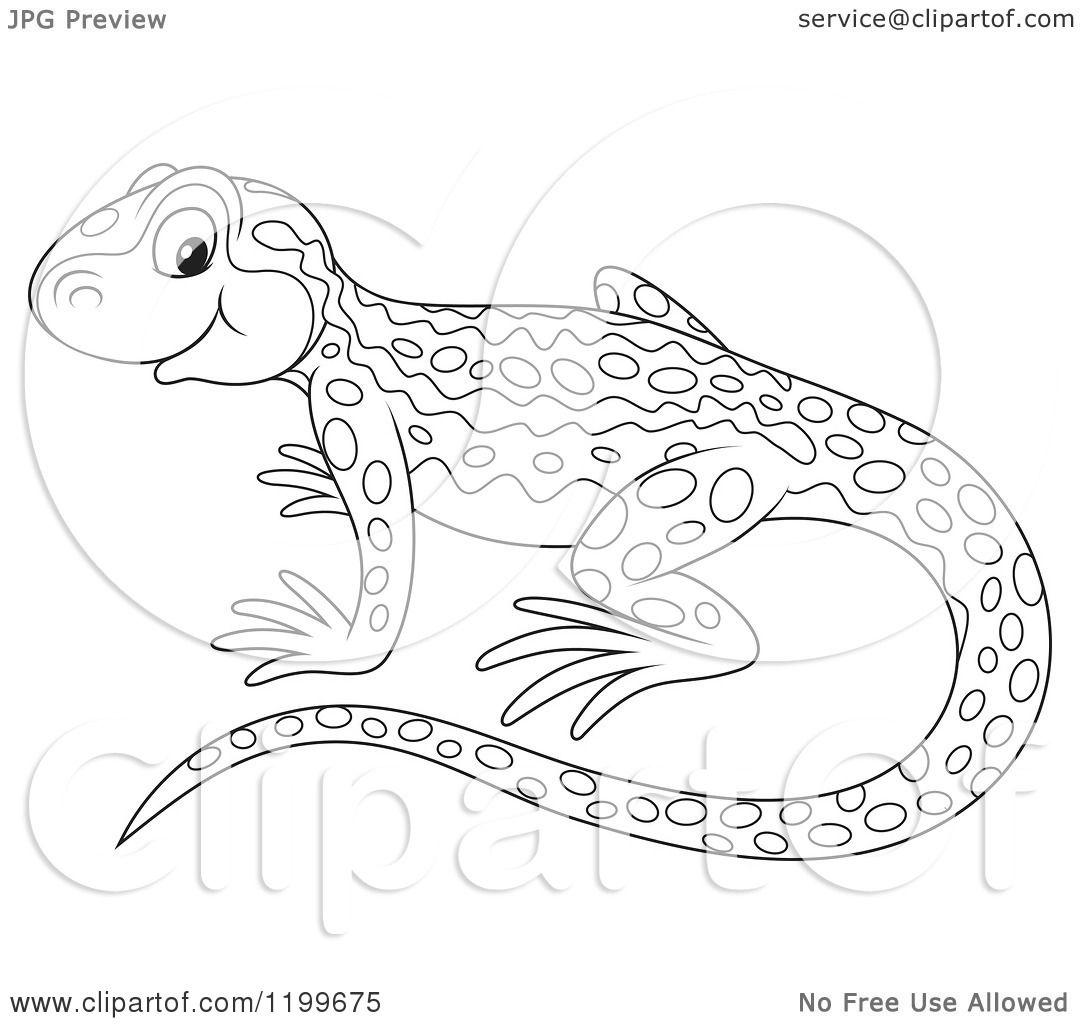 Cartoon Of A Black And White Cute Newt