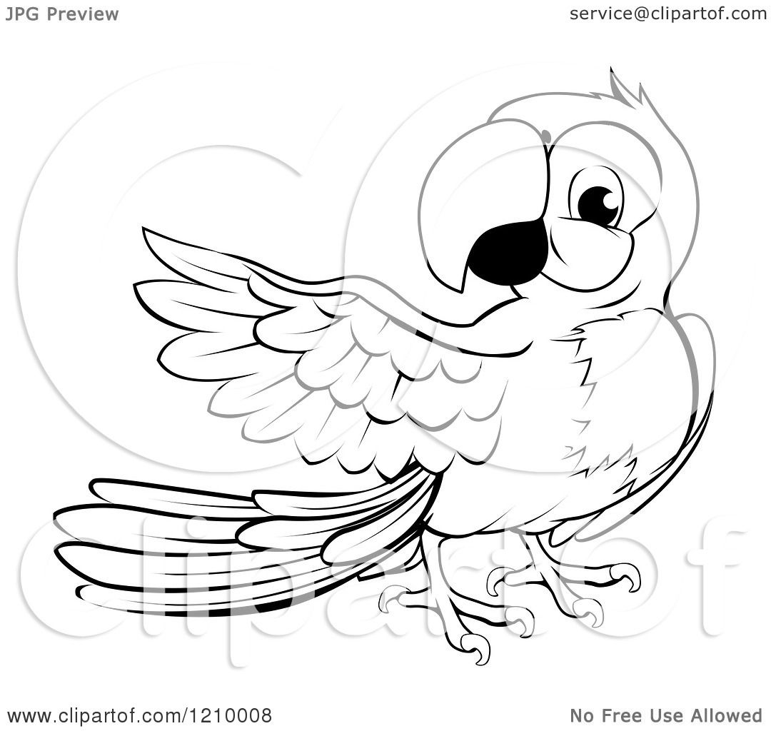 Cartoon of a Black and White Presenting Macaw Parrot