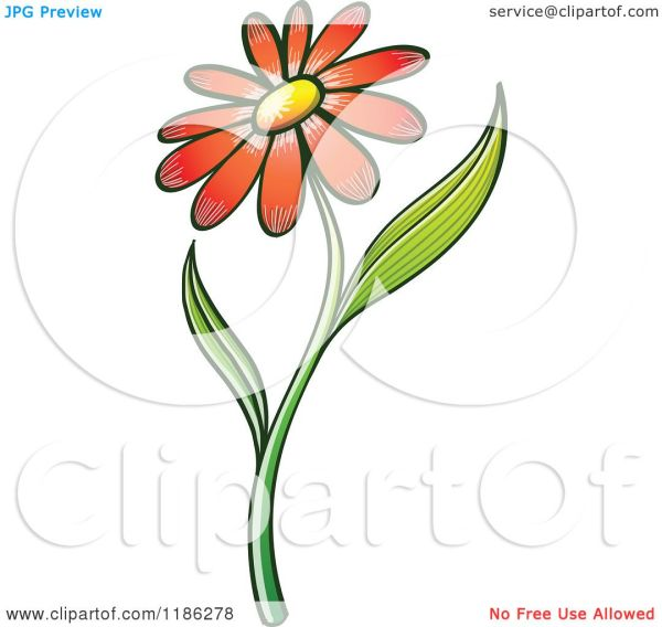 Cartoon Of Red Daisy Flower And Stem - Royalty Free