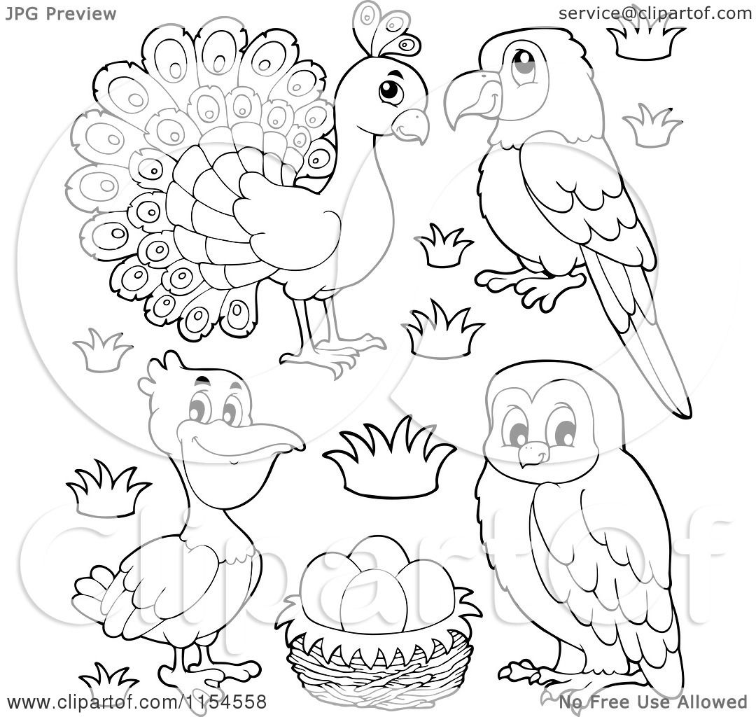 Cartoon Of An Outlined Peacock Parrot Pelican Eggs And Owl