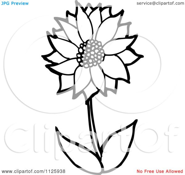 cartoon of outlined sunflower