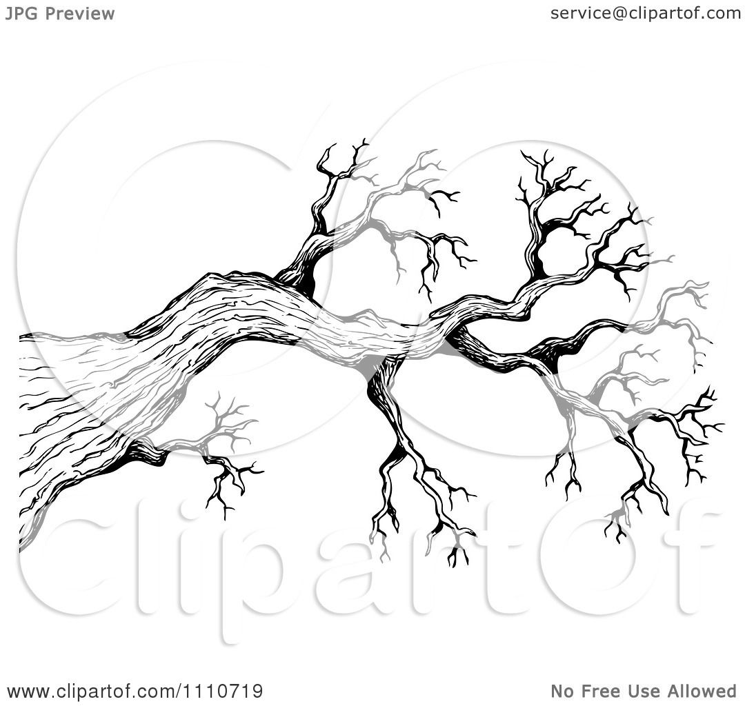 Clipart Black And White Sketched Bare Tree Branch