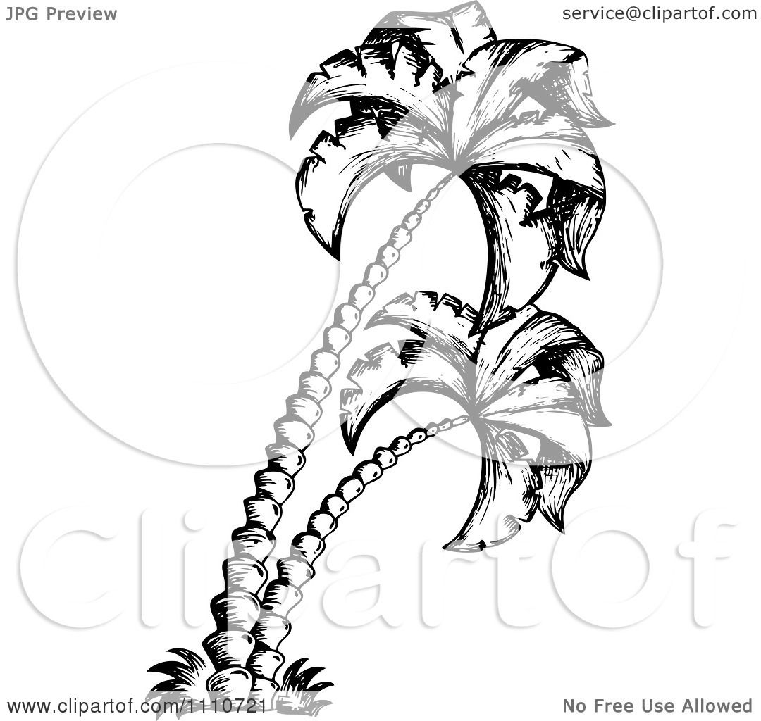 Clipart Black And White Sketched Palm Trees