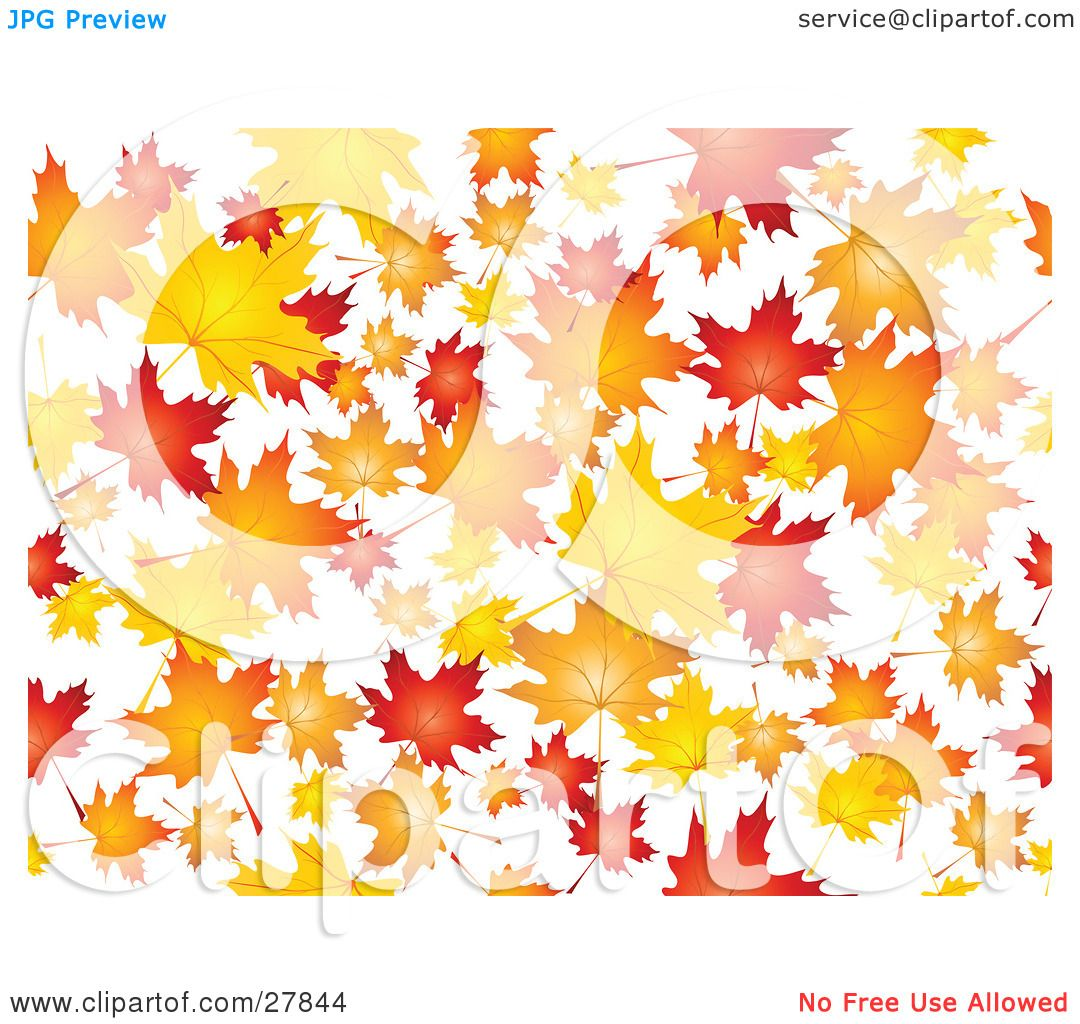 hight resolution of clipart illustration of a background of orange red and yellow maple leaves falling over white by kj pargeter