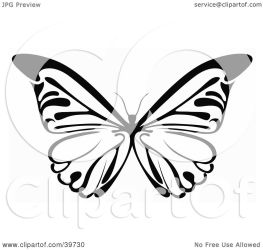 butterfly wings clipart illustration spanned its dero clip