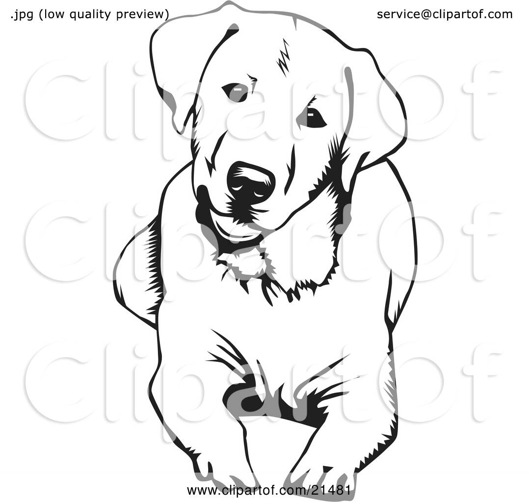 Clipart Illustration Of A Cute And Curious Labrador