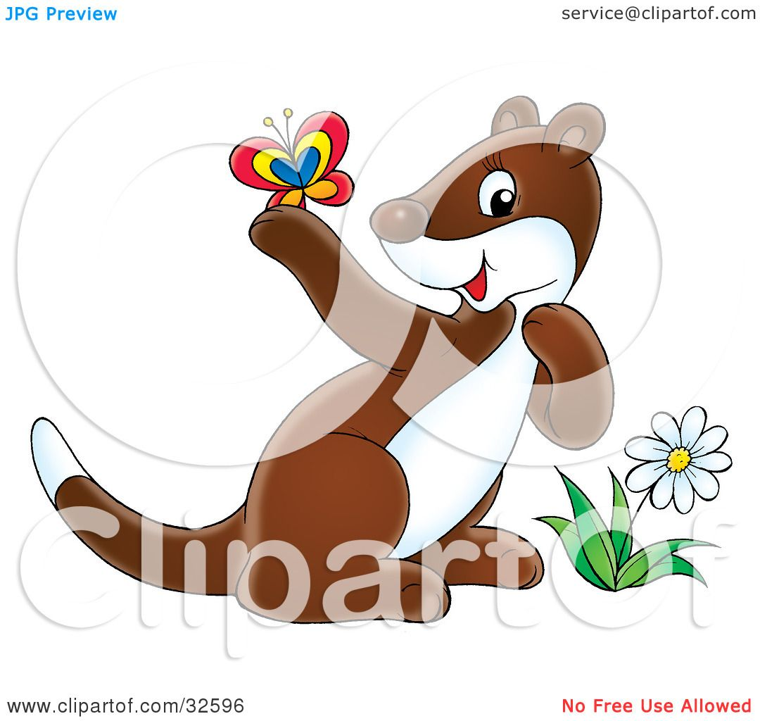 hight resolution of clipart illustration of a cute brown and white ferret by a flower admiring a butterfly