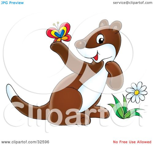 small resolution of clipart illustration of a cute brown and white ferret by a flower admiring a butterfly