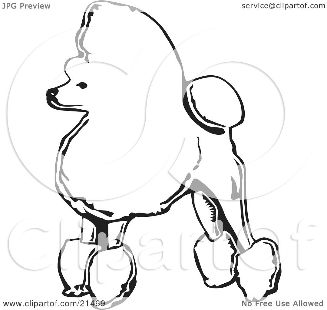 Clipart Illustration Of A Fancy Toy Poodle Dog Standing In