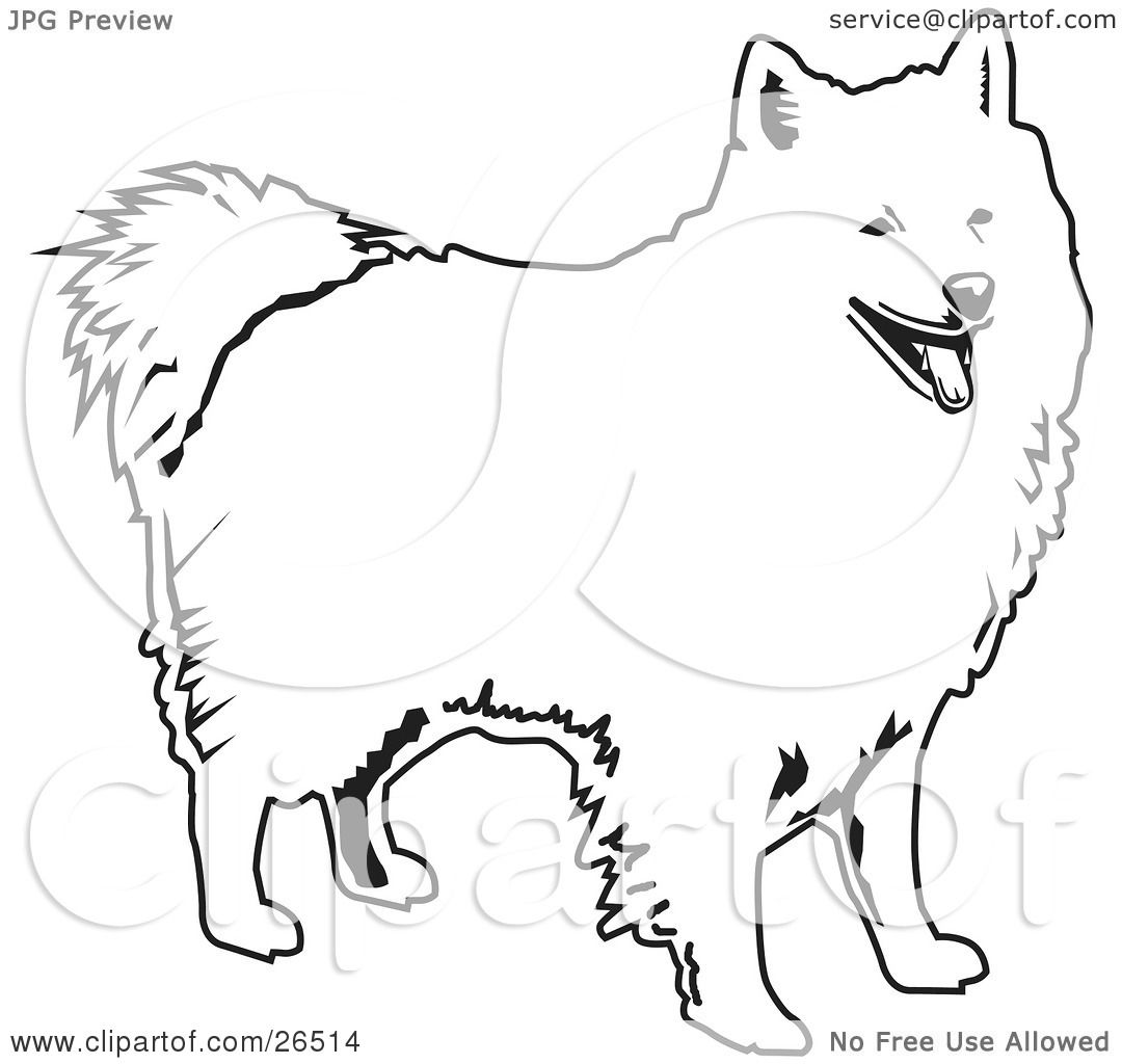 American Eskimo Dog Coloring Page Coloring Pages