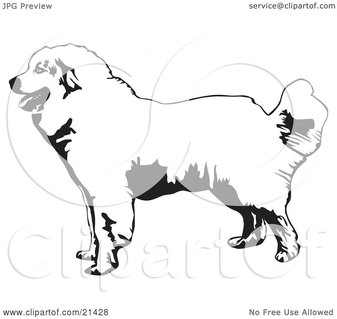 Clipart Illustration Of A Friendly Great Pyrenees Mountain