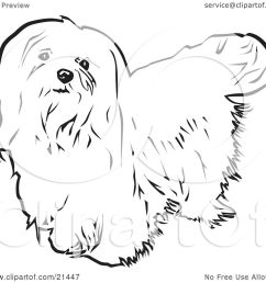 clipart illustration of a long haired maltese dog looking upwards on a white background by [ 1080 x 1024 Pixel ]