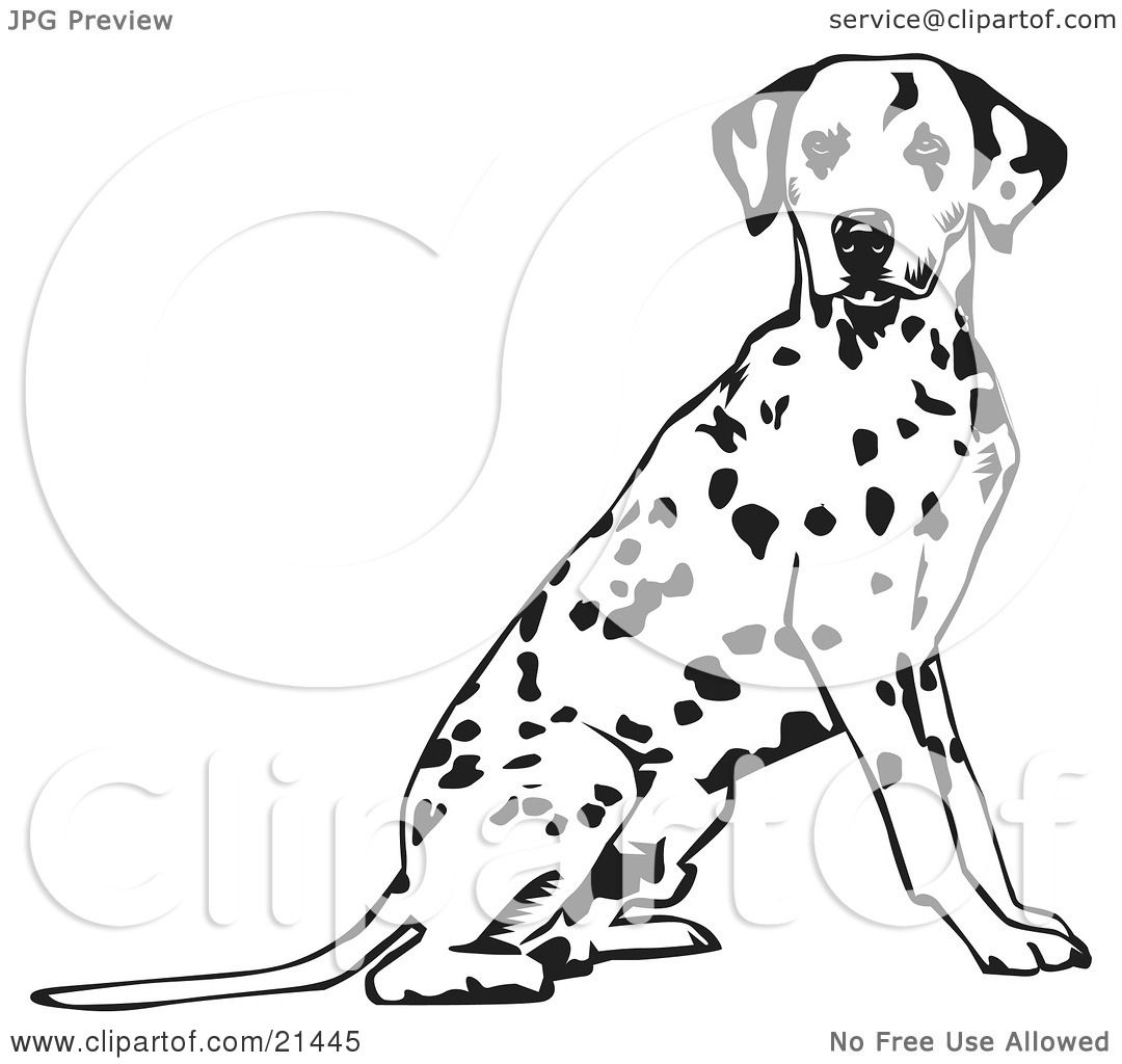 Clipart Illustration Of An Alert Spotted Dalmation Or