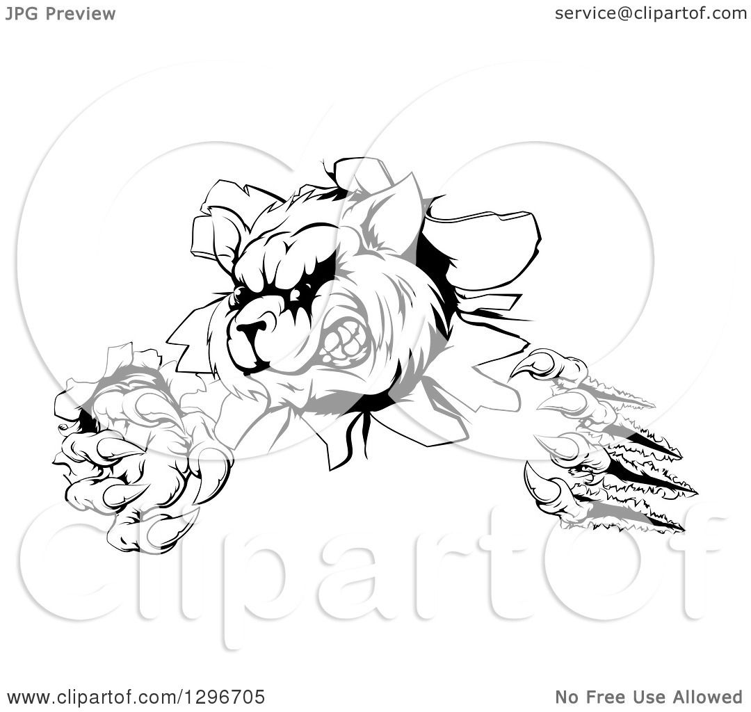 Clipart Of A Black And White Aggressive Raccoon Monster Shredding Through A Wall