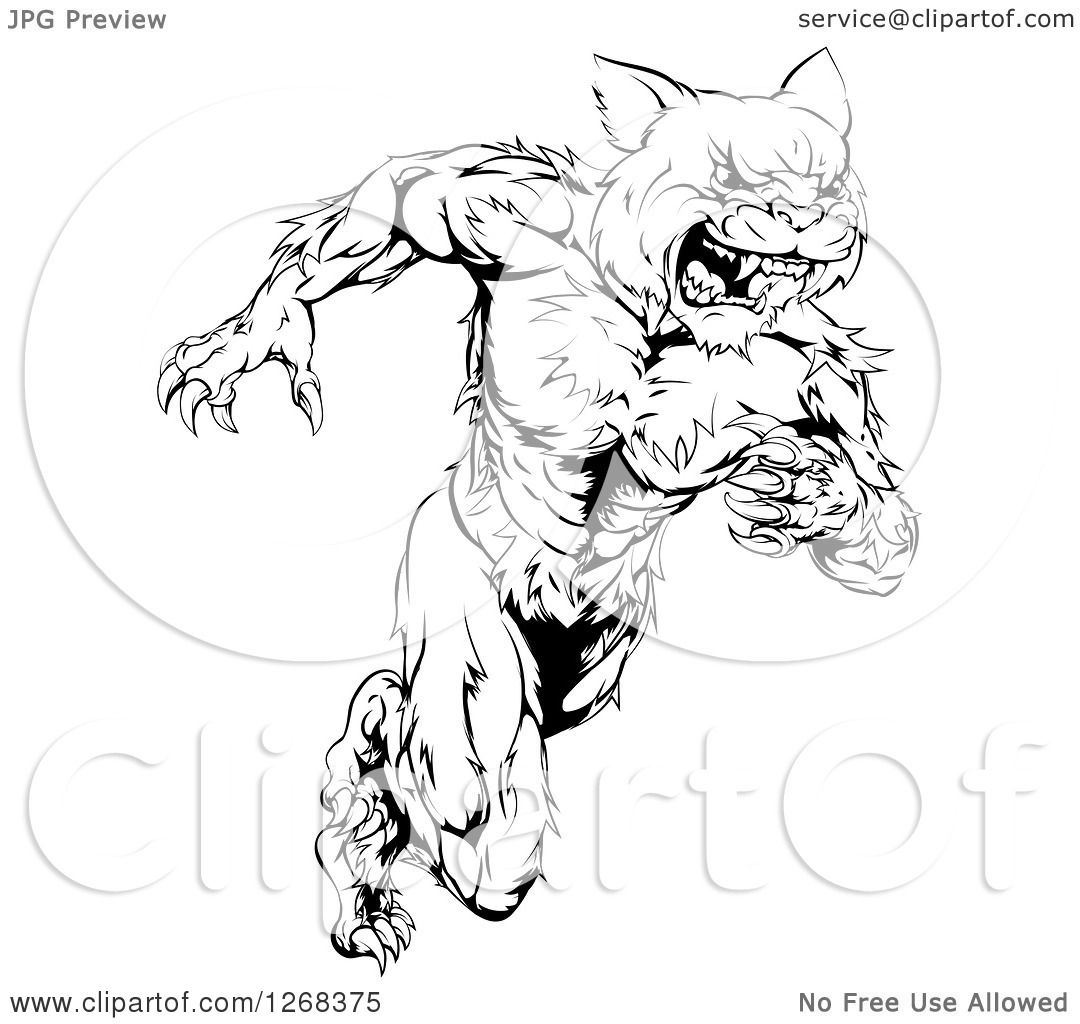 Clipart Of A Black And White Angry Muscular Wildcat Mascot