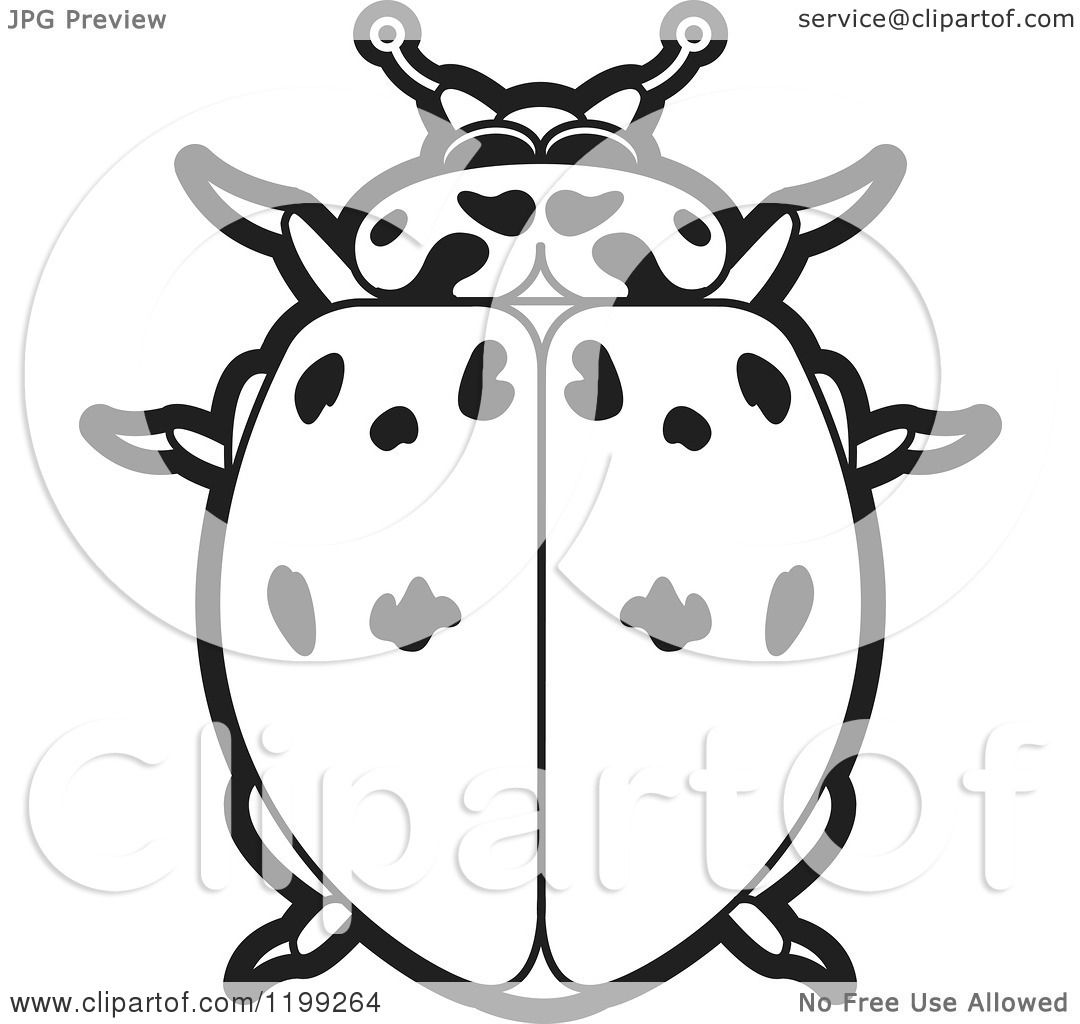 Clipart Of A Black And White Ashy Gray Lady Beetle