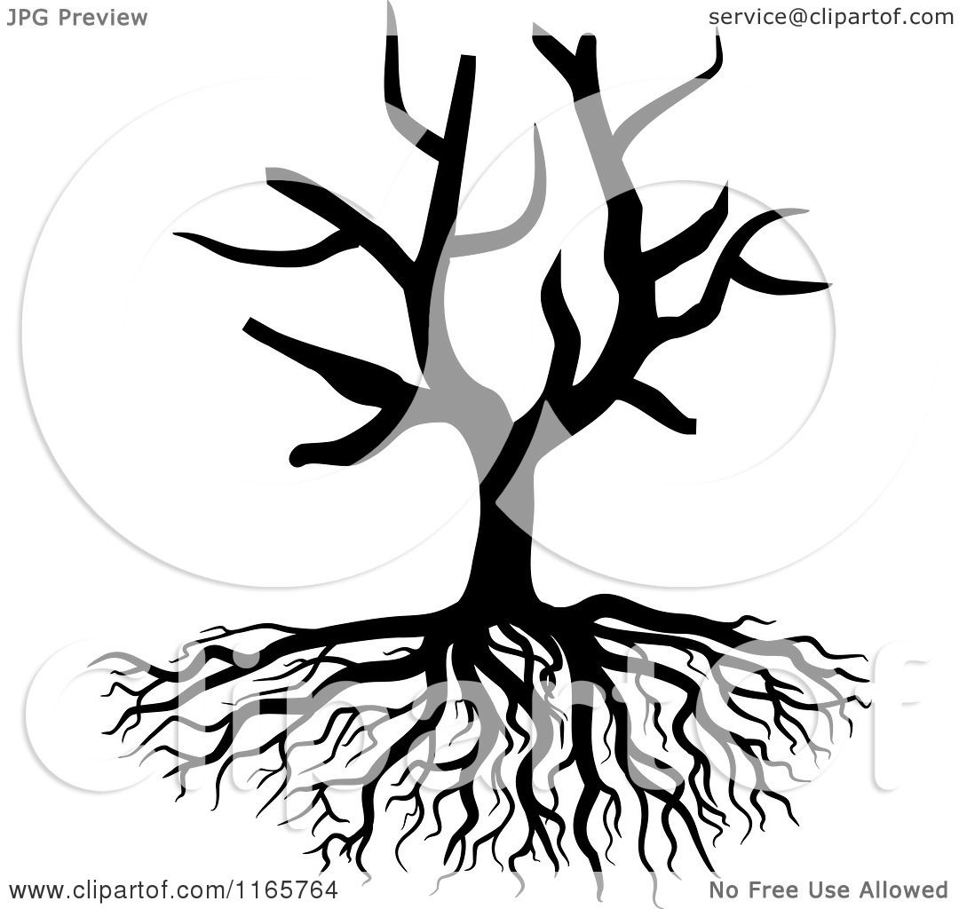 Clipart Of A Black And White Bare Tree And Roots