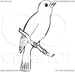 bird branch clipart illustration royalty vector prawny without